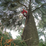 Manutenzione Giardini - potature alti fusti e tree climbing