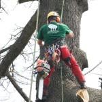 Tree Climbing Milano, Monza e Brianza- Fratelli Bonoldi Giardini
