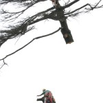 Tree Climbing Fratelli Bonoldi Giardini
