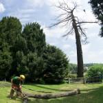 Tree Climbing Milano - Fratelli Bonoldi Giardini