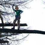 Fratelli Bonoldi Giardini - Tree Climbing Milano