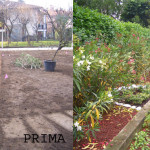 giardino FINITO