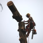 Abbattimento tree climbing